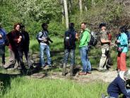 Elchingen: Dieser Wald lebt von der Flut