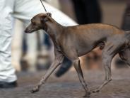 Weißenhorn: Züchterinstreitetmit Tierheim um Hund