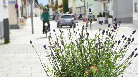 Grün: Ein Naschgarten für Weißenhorn