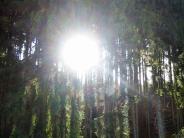 Holzwirtschaft: So geht es dem Wald