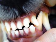 Bobingen: Polizei sucht Hundebesitzer nach Bissattacke