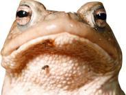 Natur: Amphibien sind bereits auf Wanderschaft