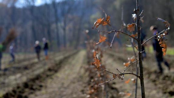 Neuburg: An der Donau entsteht ein neuer Wald
