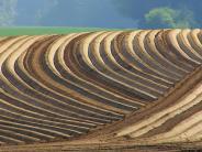 Königsmoss: Preise für Felder schießen in die Höhe
