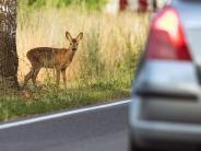 Neuburg-Schrobenhausen: Der digitalisierte Wildwechsel