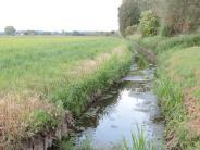 Burgheim: Burgheim fordert klare Aussagen zum Nationalpark