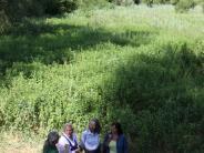 Auwald: Die Keimzelle eines möglichen Nationalparks