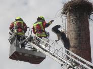 Rohrenfels: Storch hängt kopfüber aus dem Nest