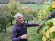 """Natur: Ein """"Dom"""" von Wein"""