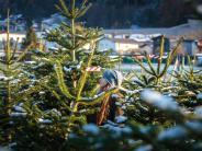 Pfaffenhofen an der Ilm: 40 Christbäume geklaut: Weihnachtsdiebe schlagen zu