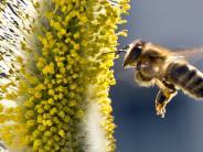 Nördlingen: Wegen einer Biene einen Unfall verursacht