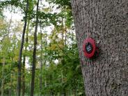 Bestattung: Der Waldfriedhof scheint gestorben