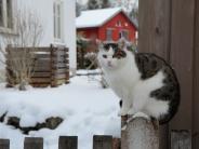 Tierquälerei: Schon wieder schießt ein Unbekannter auf eine Katze