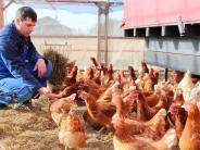 Donau-Ries: Die Folgen der Vogelgrippe