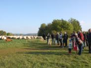 Natur: Schafe unterstützen die Arbeit