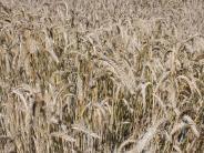 Landwirtschaft: Munninger Strategie gegen den Klimawandel