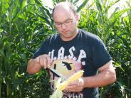 Landwirtschaft: Mit Drohnen gegen den Maiszünsler