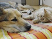 Gesetze: Tierisches Mitbringsel aus dem Urlaub