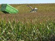 Landkreis: Bauern erwarten gute Erträge