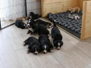 Ederheim: Paula Print zu Besuch bei neun Hundewelpen