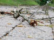 Ries: Der Sturmund seine Folgen