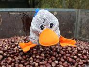 Paula Print: Kastanien für den Winterspeck