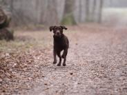 Deiningen: Hund frisst vermutlich Giftköder