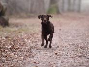 """Deiningen: Gezielter Anschlag auf Labrador """"Bobby""""?"""