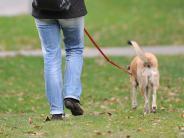 Tiere: Weiterer Hund in Deiningen vergiftet