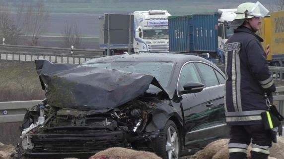Autofahrer tötet 20 Schafe: Sein Wagen raste in die Herde