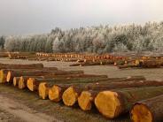 Forstwirtschaft: Bopfinger Wertholzsubmission hat begonnen
