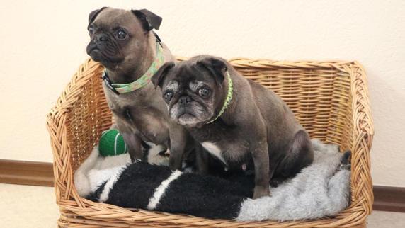 Hunde: Lillifee und Minimee suchen ein Zuhause