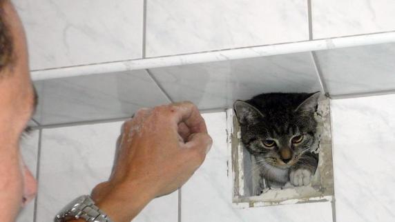 Notfälle: Feuerwehr meißelt ausgebüxtes Kätzchen aus der Wand ...