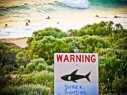 Angriff auf Surfer: Dritte Hai-Attacke vor Ostaustralien in einem Monat