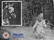 43 Kilometer pro Stunde: Polizei blitzt Pferd - und Tausenden gefällt das