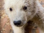 Tierpark Berlin: Eisbärenbaby Fritz ist tot