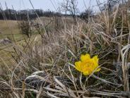 Wetter: Kältedämpfer zum kalendarischen Frühlingsbeginn