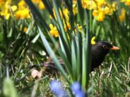 Frühling: Diese Pflanzen zeigen im Frühling ihre Blütenpracht