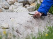 Artenschutz: Stuttgart 21: Eidechsen-Umsiedlung kostet 15 Millionen Euro