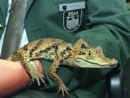 Bedrohte Arten: Schmuggel von Tieren aus demAmazonas soll eingedämmt werden