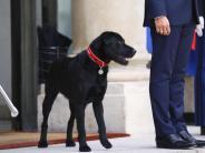 Neues Familienmitglied: «Nemo» im Élysée-Palast: Macron adoptiert Hund