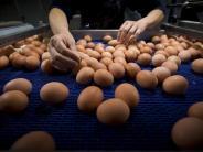 Salmonellen: Rückruf: Eier von Rewe, Aldi Nord, Penny betroffen