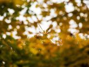Bis zu 20 Grad sind drin: Goldenes Oktoberwetter erwartet - aber nicht für alle