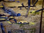 Kontrolle über Auto verloren: Tödlicher Unfall an Tramhaltestelle: Haftbefehl gegen Fahrer