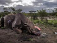 «Verbrechen an der Natur»: Bild von gewildertem Nashorn ist Wildlife-Foto des Jahres