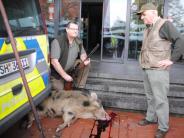 Schleswig-Holstein: Wütende Wildschweine versetzen Kleinstadt in Angst