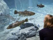 Ökosysteme nachgebildet: Riesiges Süßwasser-Aquarium in der Schweiz eröffnet