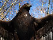 Allgäu: Die fruchtbarsten Adler Deutschlands