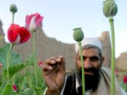 9000 Tonnen Opium: Rekordernte von Schlafmohn in Afghanistan