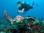 : Die Unterwasserschluchten der Similan Inseln in Thailand